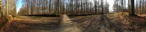 chemins forêt